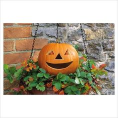 GAP Photos - Garden & Plant Picture Library - Autumn hanging basket with strawberries and Halloween Jack O'Lantern pumpkin with cherry tomato eyes. - GAP Photos - Specialising in horticultural photography