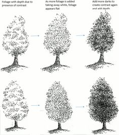 How to Draw Tree Foliage in Pen and Ink | My Pen and Ink Drawings