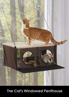 The window-mounted penthouse for cats that secures to most windows or glass doors and provides an elevated comfortable perch for multiple cats. Cat Window, Hammacher Schlemmer, Cat Things, Purchase History, Pent House, Glass Doors, Lower Case Letters, Projects To Try, Cups