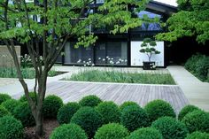 Divinely simple elegant contemporary garden design - Andrew Lawson - Photography of Plants and Gardens