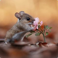 Forest Animals, Nature Animals, Animals And Pets, Cute Creatures, Beautiful Creatures, Animals Beautiful, Cute Little Animals, Cute Funny Animals, Cute Mouse
