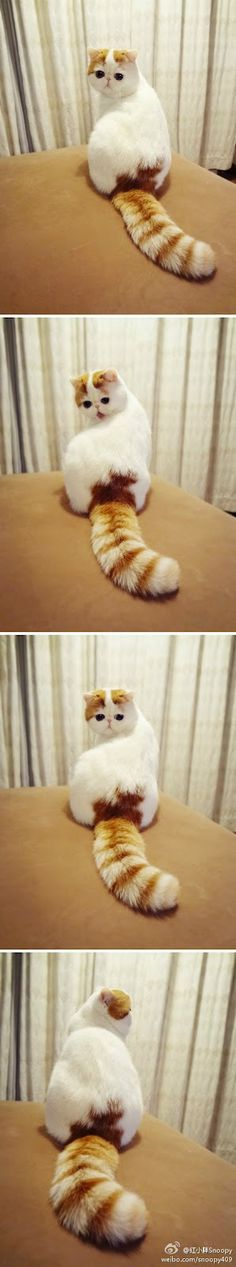 Oooo I got a cute little fluffy tail