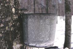 Maple sugaring on the Adirondack Coast  www.goadirondack.com