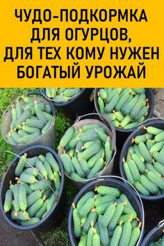 Small Vegetable Gardens, Veg Garden, Vegetable Garden Design, Fruit Garden, Small Farm, Farm Gardens, Garden Inspiration, Green Beans, Vegetables