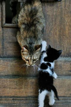 Chat et chaton ~ Cat and kitten