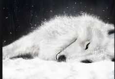 A wolf whiter than the snow