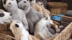 animals meerkat
