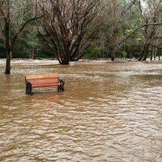 At the botanical gardens today #vicfloods #flood #flooding #webdesign #graphicdesigner #nature #wildweather