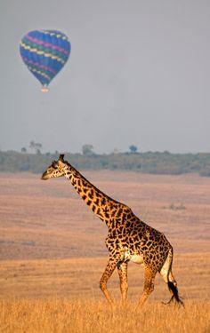 Hot air balloon for an african safari?! Yes please!