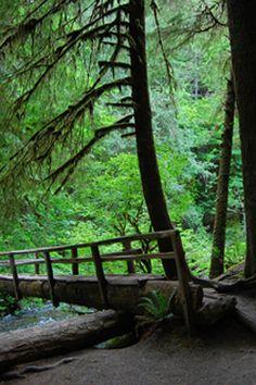 Barnes Creek Bridge - Marymere Falls
