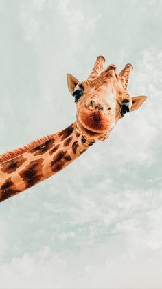 Cute Wallpaper Backgrounds, Wallpaper Iphone Cute, Cute Wallpapers, Orange Wallpaper, Giraffe Pictures, Animal Pictures, Aesthetic Backgrounds, Aesthetic Wallpapers, Wild Animal Wallpaper