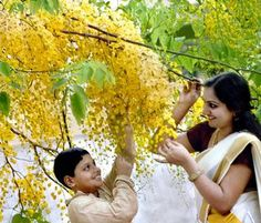 Vishu was a reaffirmation of our bond with nature and the land. It was a harvest festival that celebrated the advent of spring. It marked the beginning of the agricultural calendar when 'njattuvela' started with Vishu in the Malayalam month of Medam.   Vishu or 'Vishuvat' means equal and signifies one of the equinoxes, in this case, the spring equinox. At this time the sun is positioned vertically above a point on the equator and we have equal number of hours of daylight and darkness.