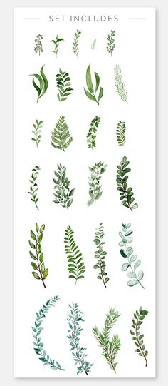 Wild Watercolor Greenery Clipart by Wooly Pronto on Watercolor Clipart, Watercolor Plants, Watercolor Leaves, Watercolor And Ink, Watercolor Illustration, Watercolor Paintings, Cute Canvas Paintings, Modern Flower Arrangements, Plant Drawing
