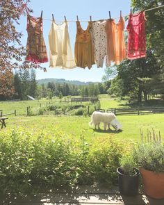 Caution: It is ill-advised to leave the compost bucket on the lawn for it is a known attractant of the polar bear. Also, Amelia has the… Nature Aesthetic, Summer Aesthetic, Compost Bucket, Farm Life, Country Life, Beautiful Places, Scenery, Photos, Painting
