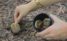 Ela plantou bolsinhas usadas de chá no jardim - e o que aconteceu foi mais do…