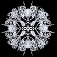 """Winter Extravagance"" - fractal art by Lady-Compassion, via deviantART"