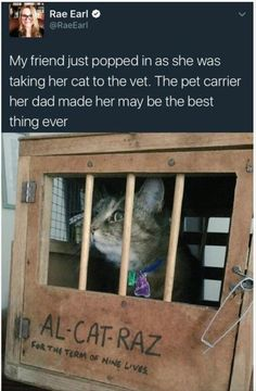 Funny Animal Pictures Of The Day: These Cats and Dogs Will Make You Cry Laughing 16 Funny Animal Pictures Of The Day: cats-kittens-dogs-memes Funny Animal Memes, Cute Funny Animals, Funny Cute, Cute Cats, Funny Memes, Funny Pics, Memes Humor, Super Funny, Jokes Pics