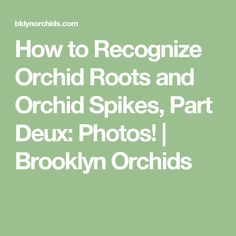 How to Recognize Orchid Roots and Orchid Spikes, Part Deux: Photos! | Brooklyn Orchids