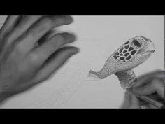 15 million dots - Stippling Time Lapse - Green Sea Turtle (Chelonia mydas) HD - YouTube