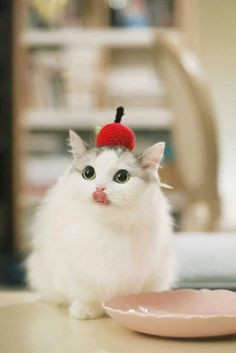 Inspiration Really Cute Cats And Kittens White Cool Cats, I Love Cats, Cute Kittens, Pretty Cats, Beautiful Cats, Cute Baby Animals, Funny Animals, Bb Chat, Chesire Cat
