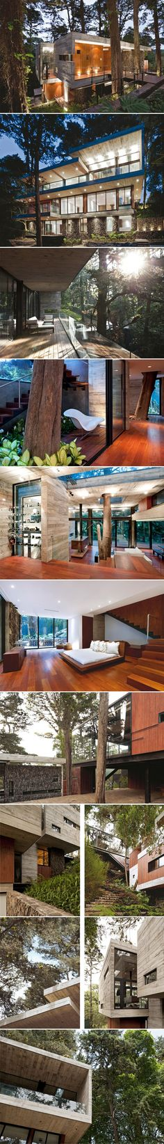 Modem house with minimal interior design focusing on beautiful natural wooden flooring plus the design of the home incorporates a tree into the living space too #architecture...x
