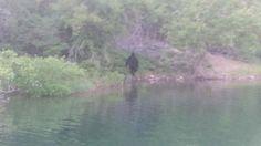 Bigfoot sighting?