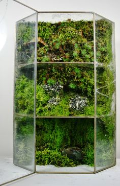we create objects of wilderness. one of a kind artisan terrariums of local plants and moss inside repurposed found and heirloom glass vessels. every living sculpture is imagined and created by Jose 'Jojo' Agatep. Aquarium Terrarium, Hanging Terrarium, Terrarium Plants, Succulent Terrarium, Succulents Garden, Garden Plants, Indoor Plants, Indoor Gardening, Hanging Planters