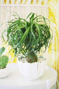 Neste post, nós selecionamos cinco plantas que são fáceis de cuidar e lindas para você aprender como cuidar de plantas e decorar o seu lar.