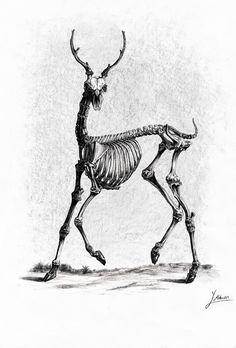 skeleton deer By Mehran yousefian by MehranYousefian.deviantart.com on @DeviantArt
