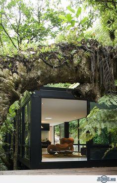Chris Tate's Forest House at Titirangi, New Zealand