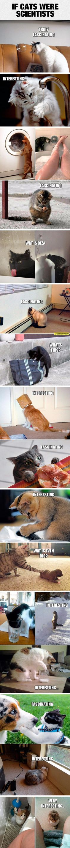 Funny pictures about If Only Cats Were Scientists. Oh, and cool pics about If Only Cats Were Scientists. Also, If Only Cats Were Scientists photos. Memes Pr, Funny Animal Memes, Cute Funny Animals, Funny Animal Pictures, Funny Cute, Cute Cats, Funny Memes, Memes Humor, Cats Humor
