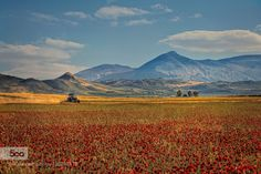 SUMMER IN ANDALUSIA by Robert-Rossbach-Photography