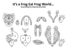 Frog dissection guide with focus on the structures of the