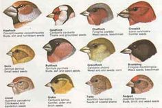 Does 'The Beak Of The Finch' Prove Darwin Was Right? - Creation RevolutionCreation Revolution