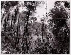 Self portrait looking down a survey cut, proposed site of Gordon below Franklin Dam, Tasmania :: Museum of Contemporary Art Australia