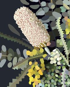 Illustration by Kimmy Hogan. Colours are vibrant and crisp printed with archival ink on lovely 300 gsm 100 cotton rag card. Art will last a lifetime. Frame not included. Botanical Art, Botanical Illustration, Illustration Art, Australian Wildflowers, Guache, Australian Art, Art Floral, Art Design, Oeuvre D'art