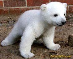 cute-polar-bear-cub.jpg (400×325)