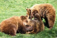 A 15 legjobb hely gyerekekkel Budapest környékén - Minimatiné Brown Bear, Budapest, Activities For Kids, Animals, Animales, Animaux, Children Activities, Animal, Kid Activities