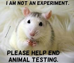 Help end animal testing Funny Rats, Cute Rats, Animal Testing, Animal Rescue, Killing Rats, Rat Man, Cats Musical, Animal Help, Peace On Earth