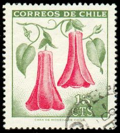Our National Flower Copihue Postage Stamp Art, Little Flowers, Mail Art, Stamp Collecting, Chili, South America, Flora, History, World