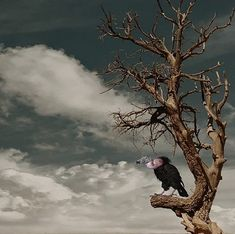 Bald Eagle, Animals, Lost City, Poems, Cities, Animales, Animaux, Animal, Animais