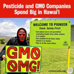 a research on the effects of gmos in hawaii Hawaii business magazine interviewed the three neighbor island hawaii mayors on various topic including the future of agriculture and gmos edited answers below kauai's mayor, bernard carvalho.