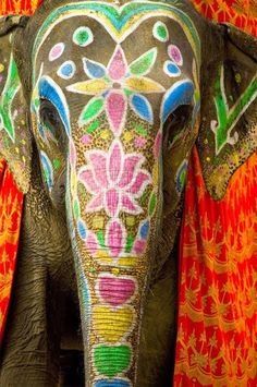 When people hear India they think about elephants which is actually very true. In most Asian countries including India elephants means wisdom. For the Hindus their god named 'Ganesh' is also in the shape of an elephant which represents wisdom. Elephant India, Elephant Love, Colorful Elephant, Asian Elephant, Elephants In India, Happy Elephant, Diwali Elephants, Henna Elephant, Wild Elephant