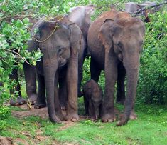 Udawalawe National Park Photo Diary - The Aussie Flashpacker Wild Elephant, Elephant Family, Beautiful Birds, Animals Beautiful, Jungle Cat, Photo Diary, African Safari, Bird Species, Sri Lanka