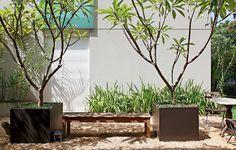 O cultivo dos jasmins-manga foi possível graças às caixas de aço galvanizadas, da Firgal. Elas permitem que as grandes árvores se desenvolvam com mais espaço de terra. Projeto da arquiteta e paisagista Patrícia Santana, da Panorama Paisagismo