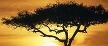 Vive una apasionante Luna de miel con un #Safari en Kenia. Aprovecha esta #oferta para realizar un viaje de novios en #Kenia con un mágico safari desde 1499€. La mejor #lunamiel montados en un 4x4 viendo tigres,leones,elefantes y mucho más en Kenia.