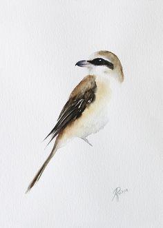 Watercolors, Bird, Brown, Animals, Animales, Watercolor Paintings, Animaux, Watercolor Drawing, Water Colors