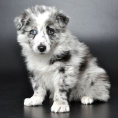 Just Puppies Justpuppiesfl On Pinterest