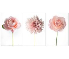 """Flower Photographs - Ranunculus, Dahlia, Rose, Set of Three Floral Still Life Photos, Large Wall Art, Minimalist Home Decor, (by GeorgiannaLane, on Etsy.com) (titles shown, from left: """"Queen of Sweden Rose,"""" """"Pink Dahlia"""" and """"Pink Ranunculus"""") (""""You will receive three separate prints in the size you choose from the drop down menu. The price for the collection reflects a 20% discount for purchasing all three but you may also purchase the images individually."""")"""