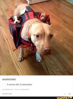 30 Funny animal captions - part funny memes, funny animal memes, animal pictures with captions Funny Dog Pictures, Animal Pictures, Cute Pictures, Silly Pics, Funny Photos, Caption Pictures, Jokes Photos, Smile Pictures, Random Pictures